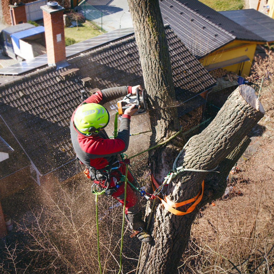 Save your landscape by scheduling tree service
