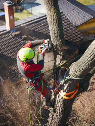 Storm Cleanup and Tree Service